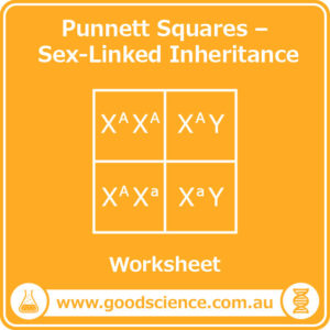 punnett squares sex-linked inheritance worksheet